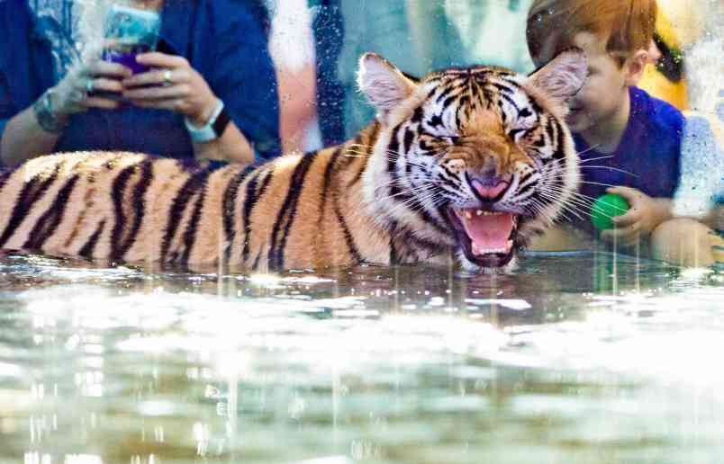 Mike Vii In Water